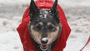 Koira ulkoilee Manhattanilla lumisateessa Copyright: imago/Xinhua/ All Over Press. Photographer: imago/Xinhua.
