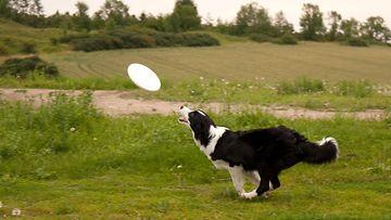 Onko lemmikkisi vakuutuskelpoinen? Tällainen koira tai kissa kelpaa vakuutusyhtiöille ...