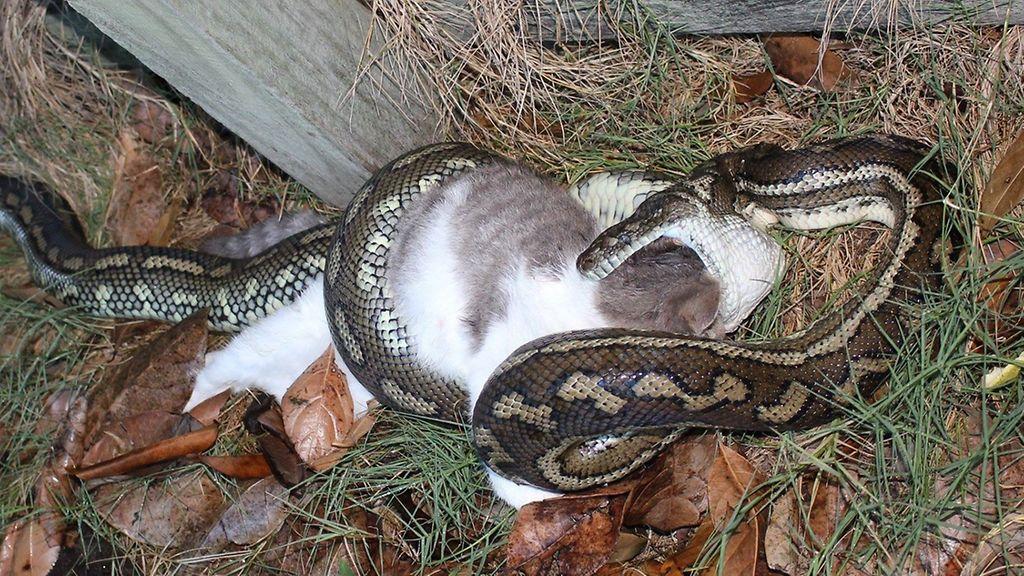 Maailman Myrkyllisin Käärme