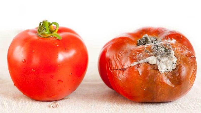 tomaatti (1)