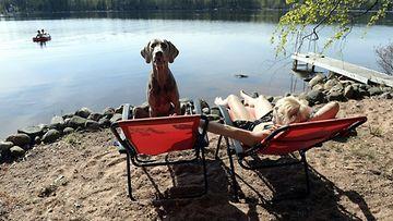 koira ja nainen auringossa