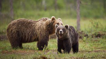 Karhun Tappavat Osuma-Alueet