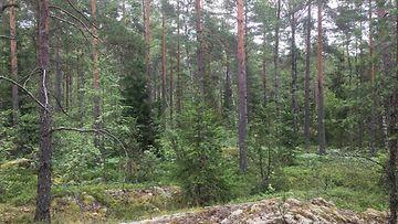Ilmasto, metsä, Nuuksio