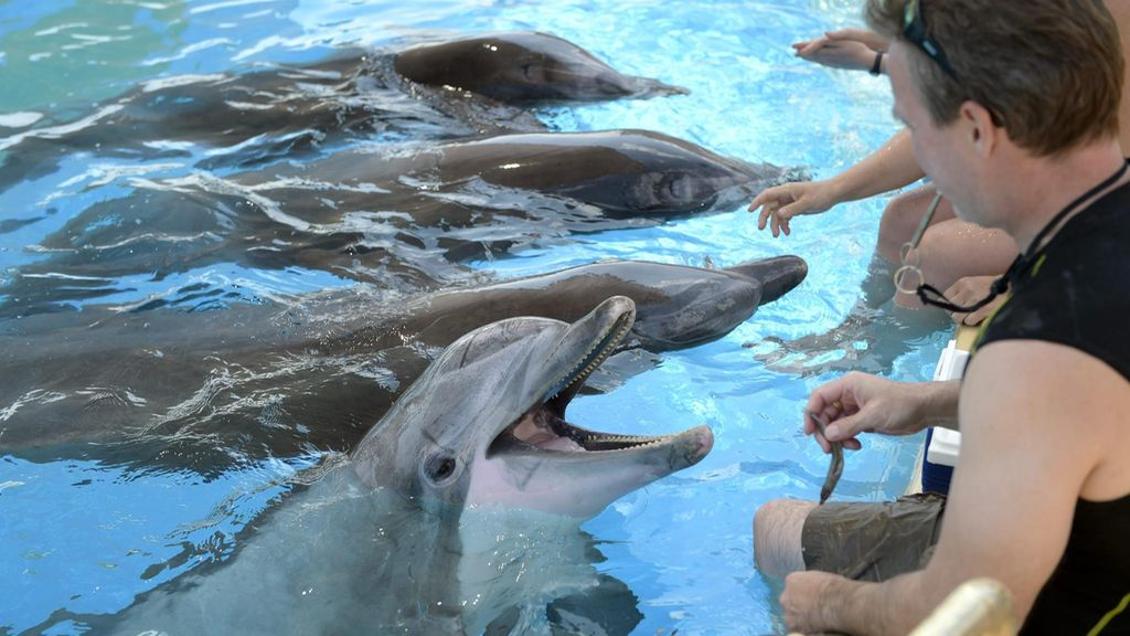 Delfiinit Särkänniemi