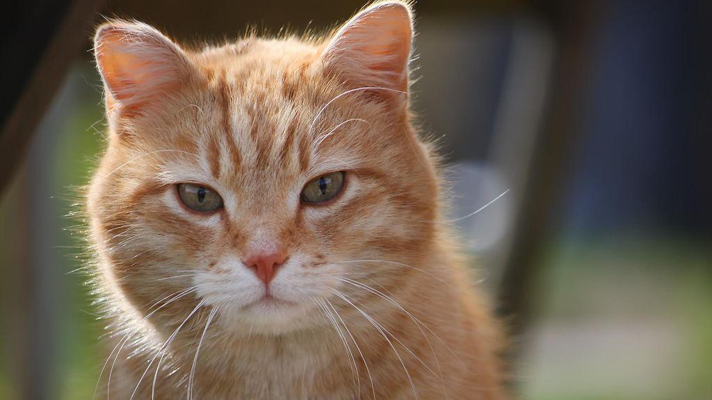 Kissa Puskee