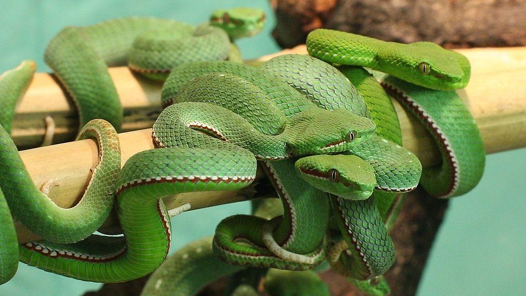 Vihreä Käärme