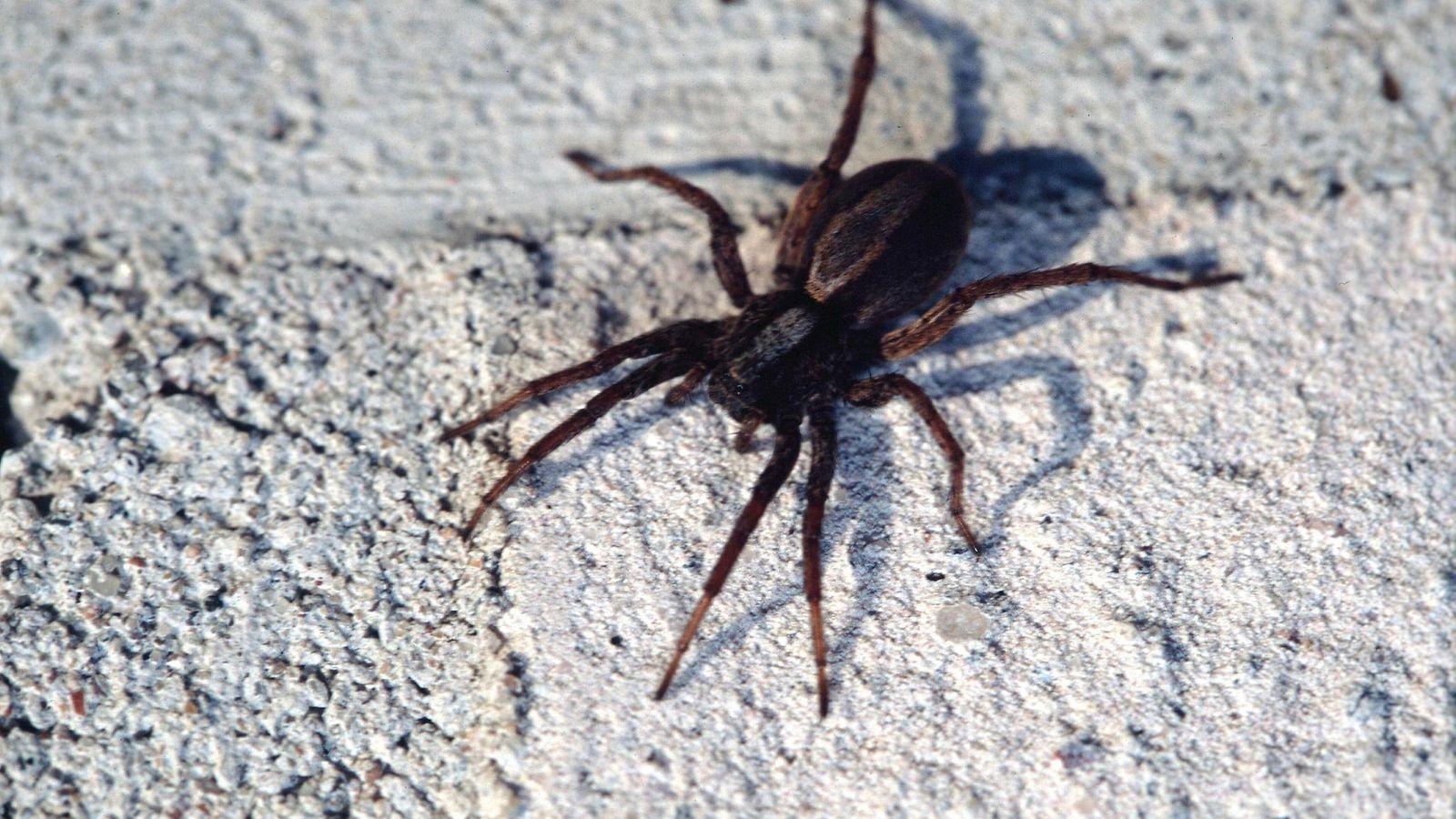 Hämähäkit Suomessa