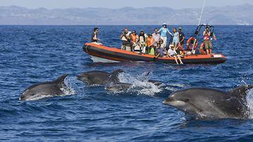 delfiiniristeily (2)