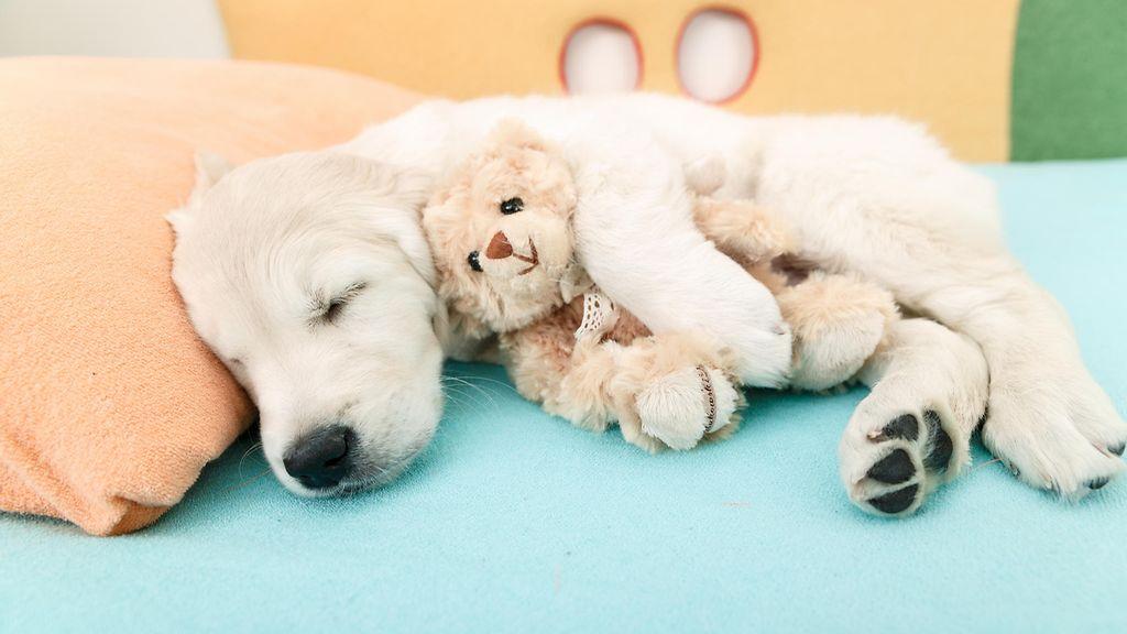 Nukkuva Koira