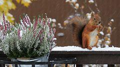 Lukijoiden hurmaavat ensilumikuvat: Talvi on t��ll�!