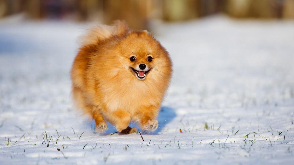 mummon pillu koira kuva