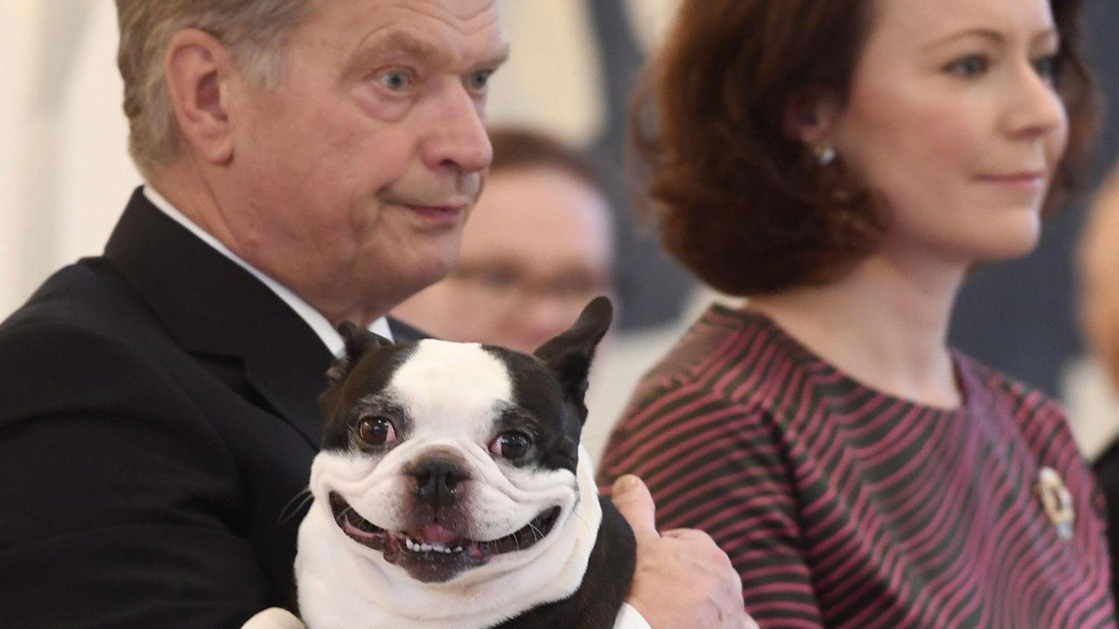 Presidentin Koira