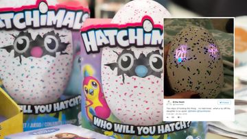 hatchimals rikki