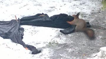 suomi 24 deitti orava pillu