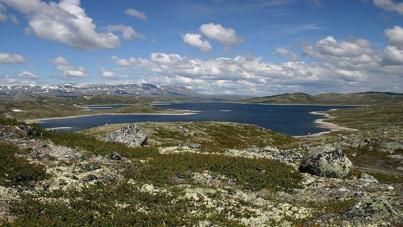 Hardangerviddaflora