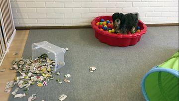 Boogie, Happy Dog Inn -koirien päiväkoti