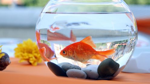 joogaa alasti krapulassa tai lumihangessa suosikkilaji muuntuu moneksi lifestyle. Black Bedroom Furniture Sets. Home Design Ideas