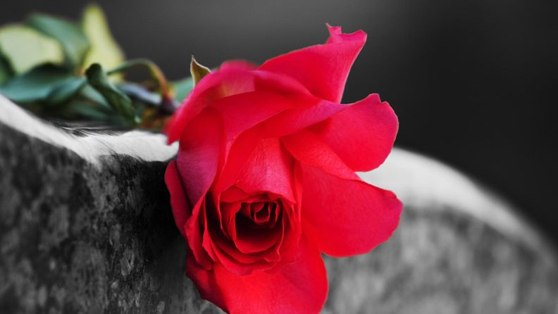 ruusu, hauta, kuolema