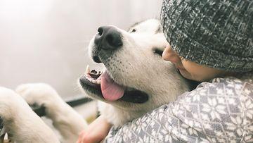 koira rakkaus omistaja
