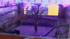 Video: Peruna saatiin kasvamaan Mars-laboratoriossa Perussa