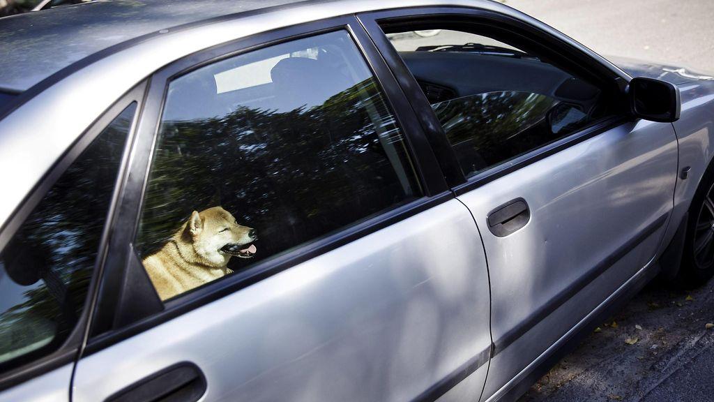 Koira Auto