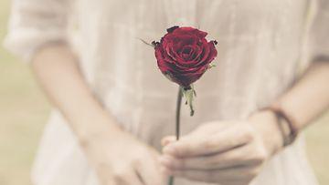 ruusu, morsian, suru
