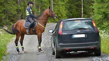 hevonen liikenteessä