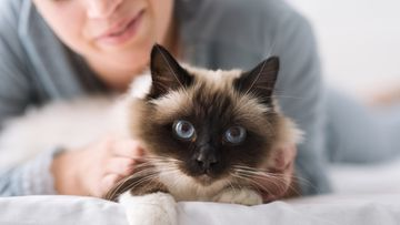 lemmikki kissa