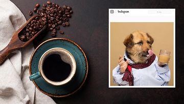 koirien kahvi