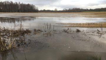 tulva, talvitulva, pellot, ravinteet, typpi, fosfori