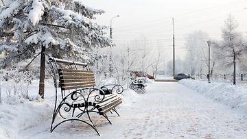 penkki, puisto, lumi