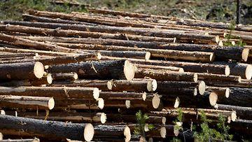 metsä tukki metsäteollisuus lehtikuva