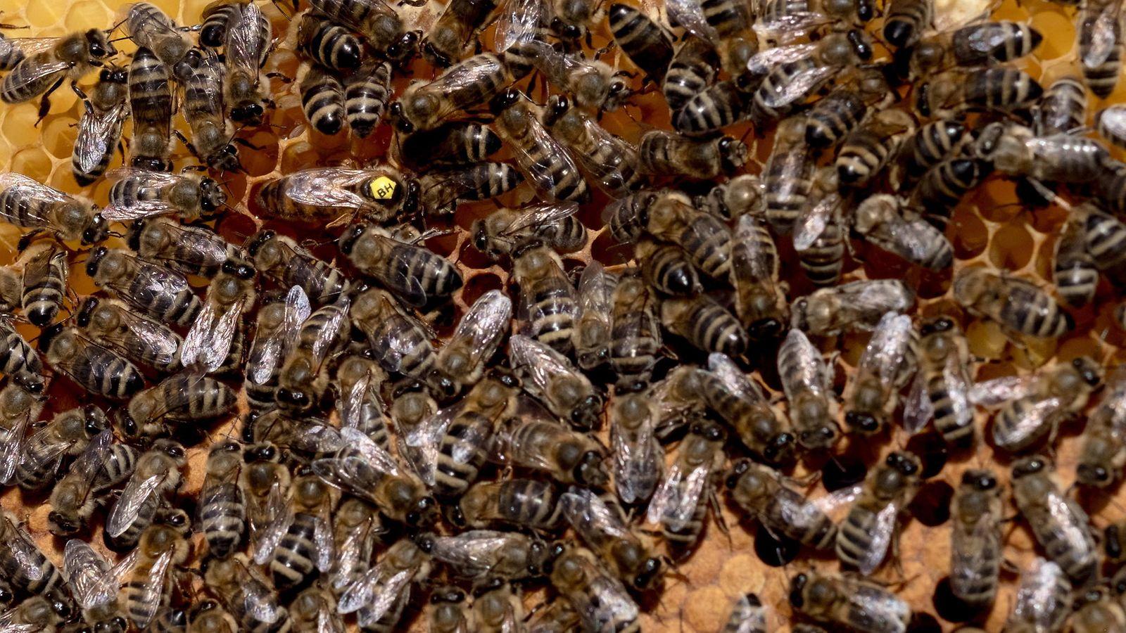 Mehiläisten Torjunta