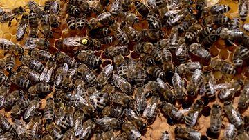 Mehiläinen, mehiläispesä, hunaja