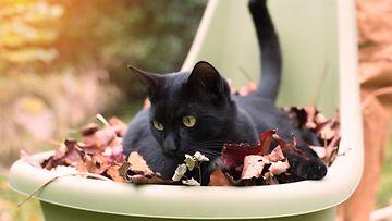 kissa, lehdet