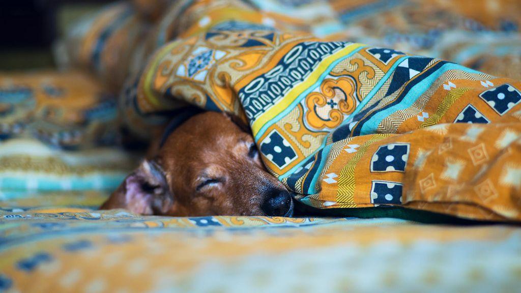Koira Nukkuu Paljon