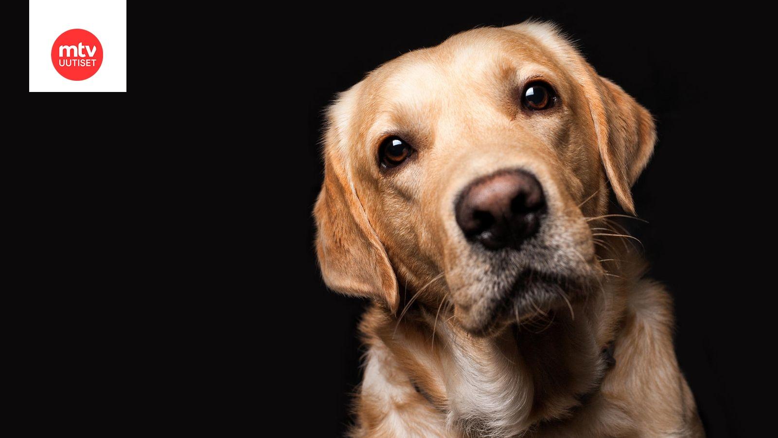 Koira Pelkää Ulkona