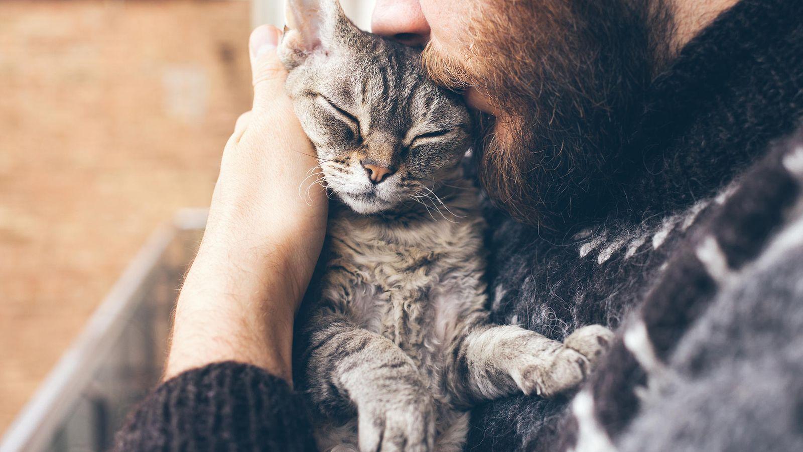Pitävätkö kissat halailusta? Asiantuntijat vastaavat