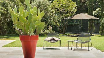 Piha kaktus Asuntomessut
