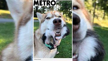 Kuvan lähde Metro