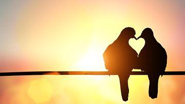 rakkaus, sydän, kyyhky, kyyhkyläiset