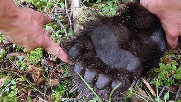 MTV karhujahti Keme metsästys karhu metsästäjä 5