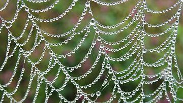 Uutissilmä, hämähäkki, seitti