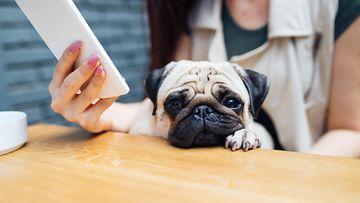 koira, omistaja, puhelin