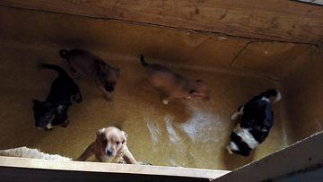 Pentutehdas pentutehtailu eläintem suojelu eläinsuojelurikos koiranpentu koira