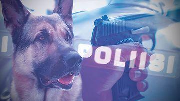 poliisikoira paakuva