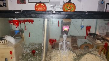 maria halloween gerbiili
