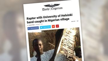 Raptor with University of Helsinki band caught in Nigerian village