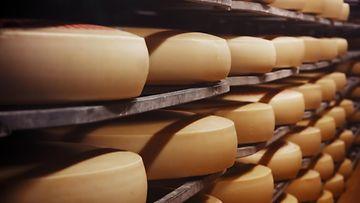 juusto juustotehdas