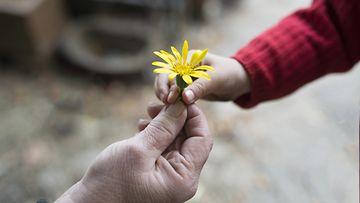 isoäiti, tyttärentytär, lapsenlapsi, kädet, kukka